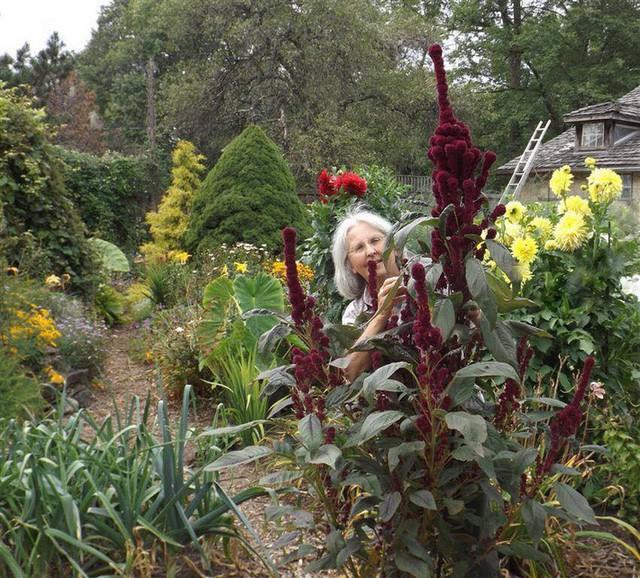 Khu vườn trồng đủ loại rau củ quả khổng lồ của ông bà lão yêu thích làm vườn sau khi nghỉ hưu - Ảnh 24.