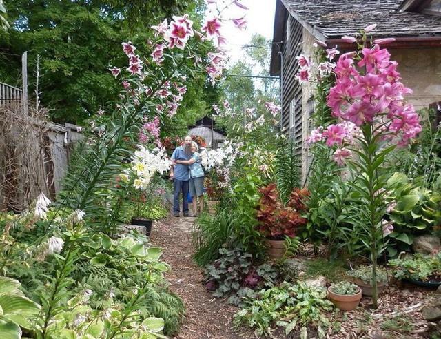 Khu vườn trồng đủ loại rau củ quả khổng lồ của ông bà lão yêu thích làm vườn sau khi nghỉ hưu - Ảnh 4.