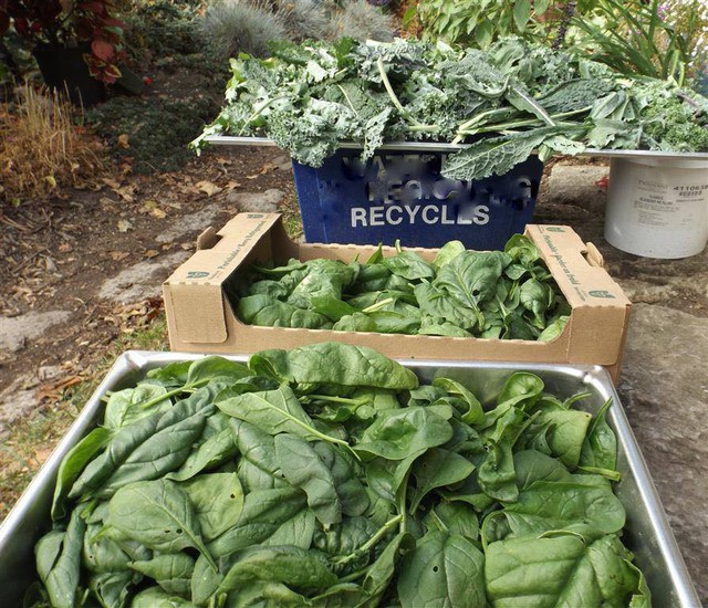 Khu vườn trồng đủ loại rau củ quả khổng lồ của ông bà lão yêu thích làm vườn sau khi nghỉ hưu - Ảnh 5.