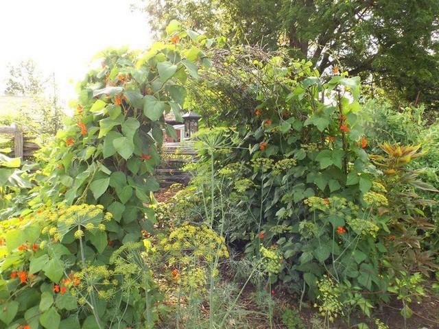 Khu vườn trồng đủ loại rau củ quả khổng lồ của ông bà lão yêu thích làm vườn sau khi nghỉ hưu - Ảnh 9.