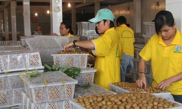6 loại trái cây tươi ở Việt Nam đã được xuất khẩu thành công với giá bán khó tin - Ảnh 3.