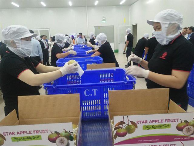 6 loại trái cây tươi ở Việt Nam đã được xuất khẩu thành công với giá bán khó tin - Ảnh 10.