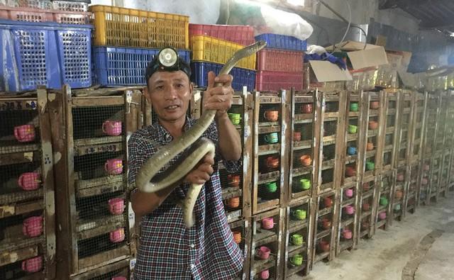 Ớn lạnh người đàn ông nuôi đàn rắn độc hơn 1.000 con, dài cả mét - Ảnh 1.