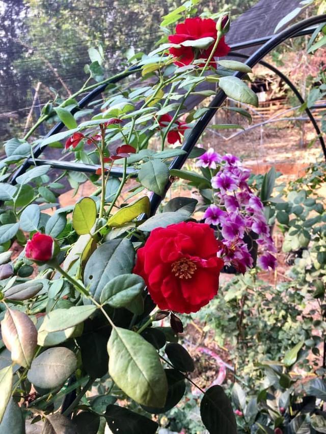 Nữ hoàng cảnh nóng Việt Nam để mặt mộc lộ rõ dấu hiệu tuổi tác đi chăm vườn cây 5000 m2 đầy hoa thơm - Ảnh 3.