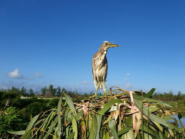 Gỡ chim cò dính bẫy, người phụ nữ ở Hà Tĩnh bị mổ rách giác mạc - Ảnh 1.