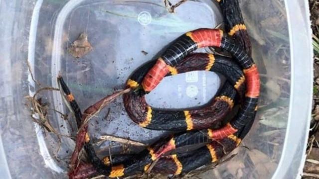 Xả thân bảo vệ chủ khỏi rắn độc, chó pitbull bị cắn chết ở Mỹ - Ảnh 1.