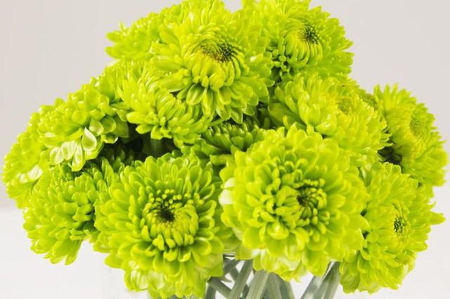 3 mẹo cắm hoa đơn giản ai cũng có thể thực hiện giúp căn nhà bừng sáng - Ảnh 9.