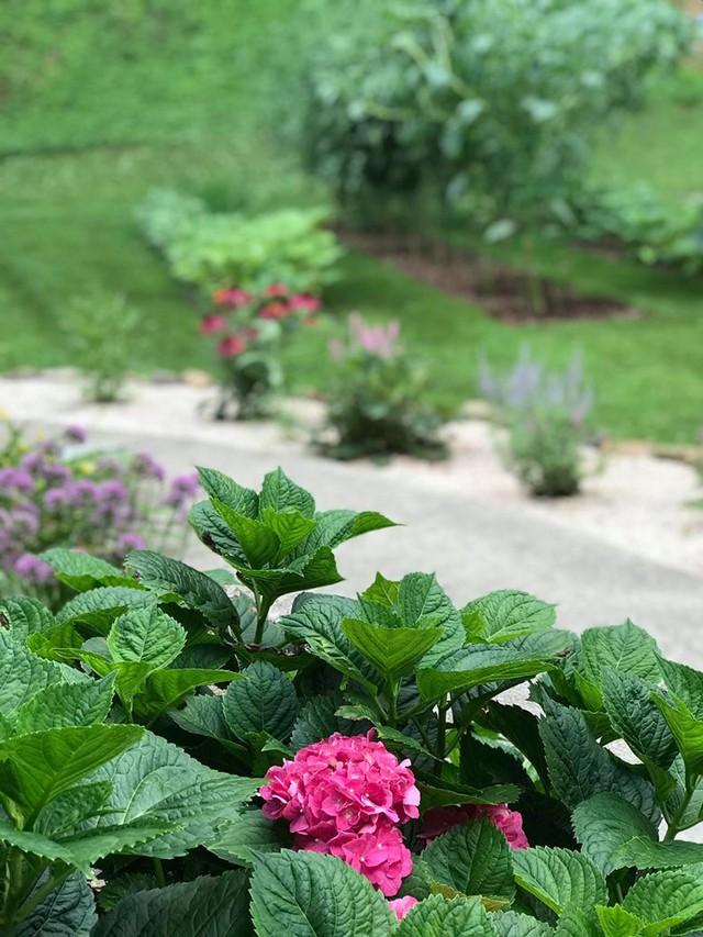 Cô giáo trẻ xinh đẹp yêu làm vườn, thích nấu ăn và giấc mơ được trồng rau quả sạch suốt cuộc đời - Ảnh 11.
