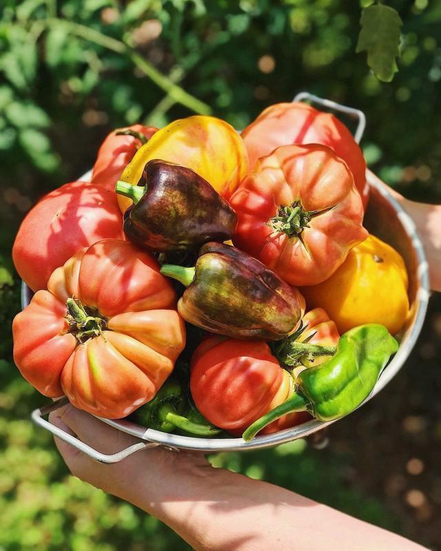 Cô giáo trẻ xinh đẹp yêu làm vườn, thích nấu ăn và giấc mơ được trồng rau quả sạch suốt cuộc đời - Ảnh 15.