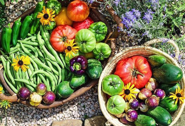 Cô giáo trẻ xinh đẹp yêu làm vườn, thích nấu ăn và giấc mơ được trồng rau quả sạch suốt cuộc đời - Ảnh 16.