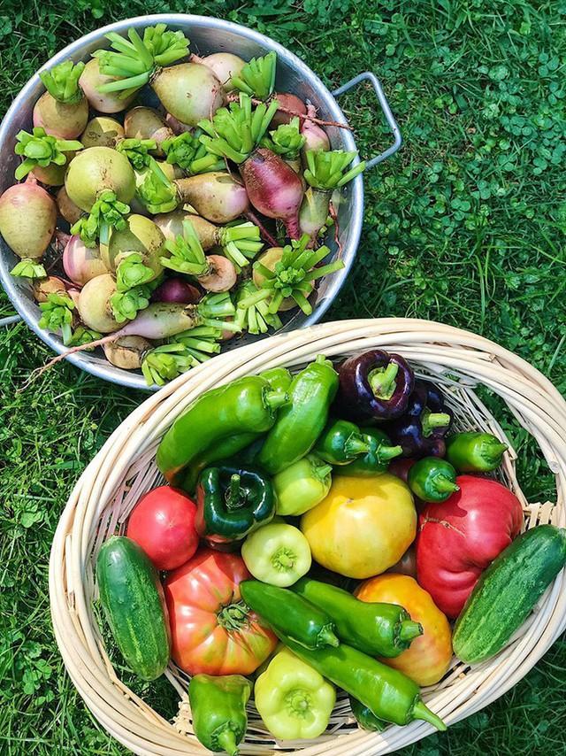 Cô giáo trẻ xinh đẹp yêu làm vườn, thích nấu ăn và giấc mơ được trồng rau quả sạch suốt cuộc đời - Ảnh 3.