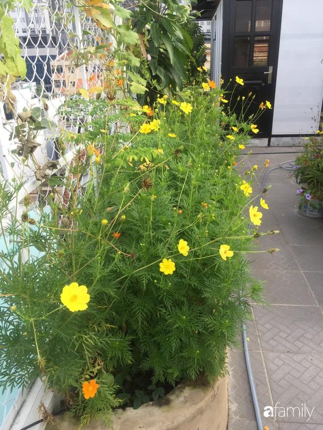 Khu vườn 30m² muôn hoa đua nở trên sân thượng của mẹ đảm thích mộng mơ ở TP. HCM - Ảnh 11.