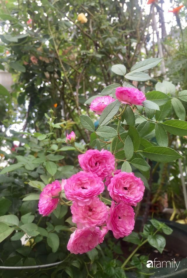 Khu vườn 30m² muôn hoa đua nở trên sân thượng của mẹ đảm thích mộng mơ ở TP. HCM - Ảnh 12.