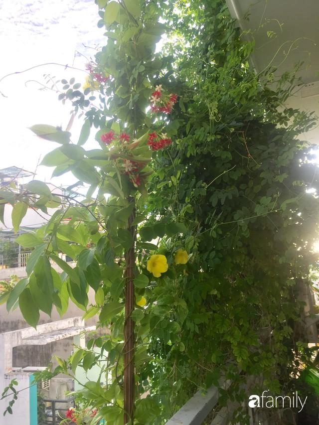 Khu vườn 30m² muôn hoa đua nở trên sân thượng của mẹ đảm thích mộng mơ ở TP. HCM - Ảnh 13.