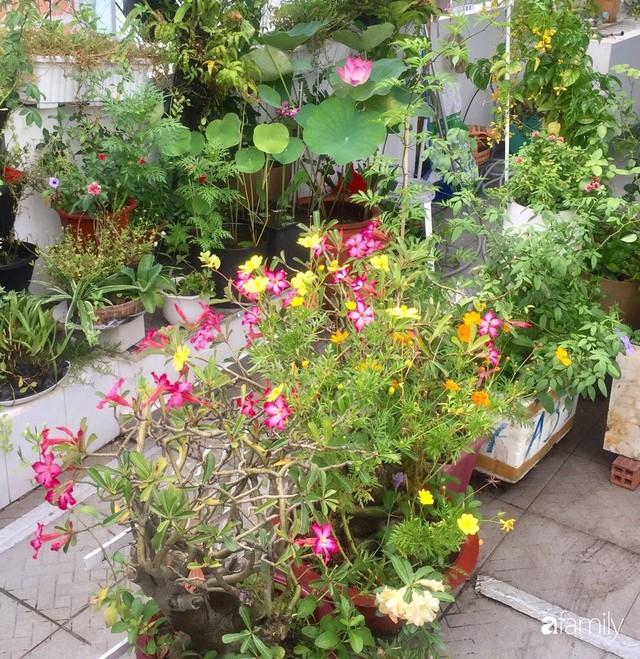 Khu vườn 30m² muôn hoa đua nở trên sân thượng của mẹ đảm thích mộng mơ ở TP. HCM - Ảnh 15.