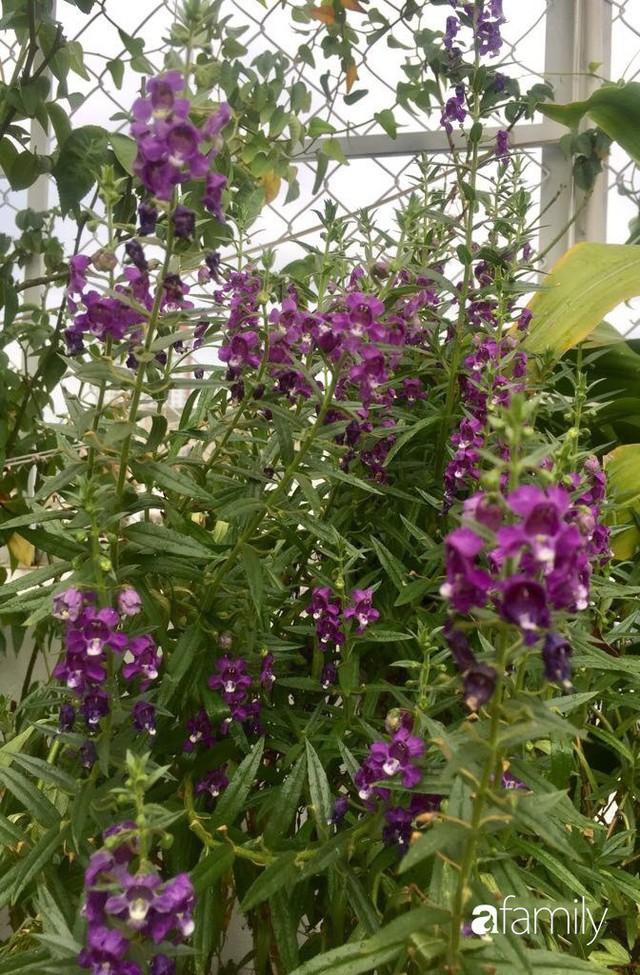 Khu vườn 30m² muôn hoa đua nở trên sân thượng của mẹ đảm thích mộng mơ ở TP. HCM - Ảnh 18.