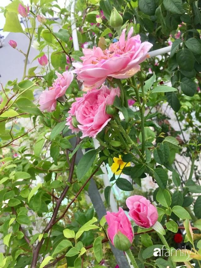 Khu vườn 30m² muôn hoa đua nở trên sân thượng của mẹ đảm thích mộng mơ ở TP. HCM - Ảnh 19.