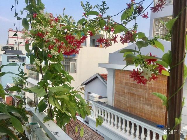 Khu vườn 30m² muôn hoa đua nở trên sân thượng của mẹ đảm thích mộng mơ ở TP. HCM - Ảnh 3.