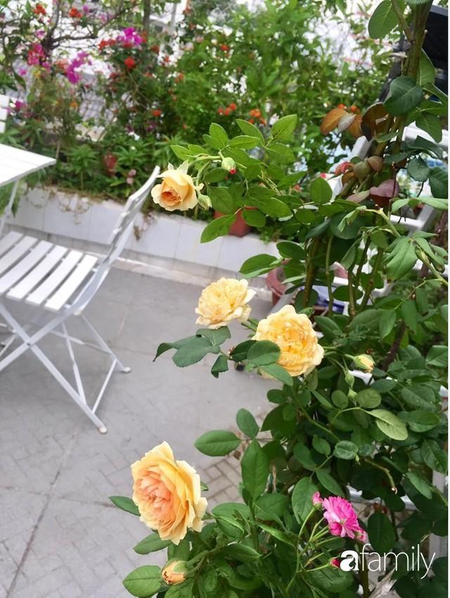 Khu vườn 30m² muôn hoa đua nở trên sân thượng của mẹ đảm thích mộng mơ ở TP. HCM - Ảnh 21.
