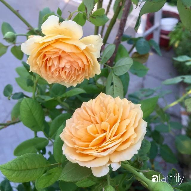 Khu vườn 30m² muôn hoa đua nở trên sân thượng của mẹ đảm thích mộng mơ ở TP. HCM - Ảnh 22.