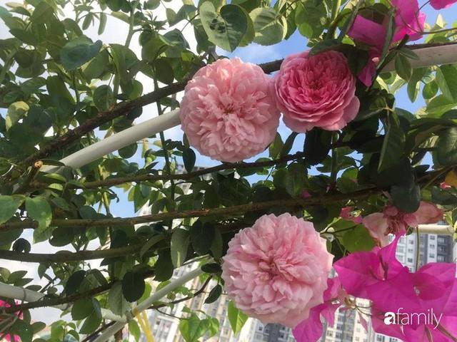 Khu vườn 30m² muôn hoa đua nở trên sân thượng của mẹ đảm thích mộng mơ ở TP. HCM - Ảnh 27.