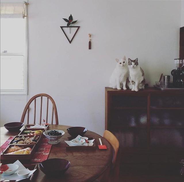 Cô gái trẻ từ bỏ công việc thành phố về nông thôn sống trong ngôi nhà nhỏ cùng những tháng ngày thảnh thơi không vướng bận lo toan - Ảnh 28.