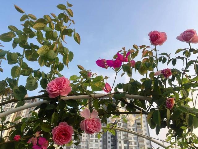 Khu vườn 30m² muôn hoa đua nở trên sân thượng của mẹ đảm thích mộng mơ ở TP. HCM - Ảnh 29.