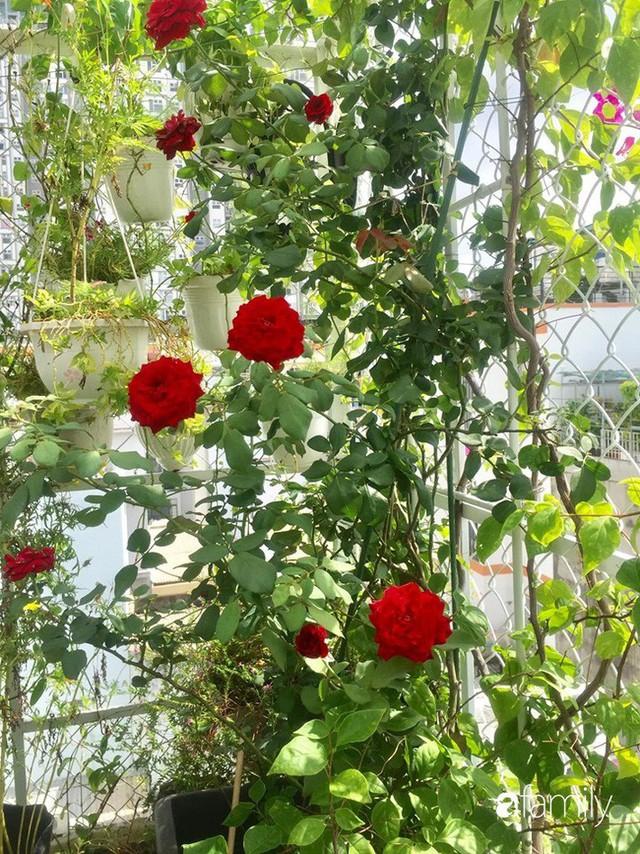 Khu vườn 30m² muôn hoa đua nở trên sân thượng của mẹ đảm thích mộng mơ ở TP. HCM - Ảnh 4.
