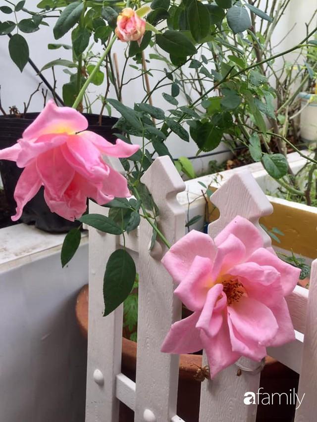 Khu vườn 30m² muôn hoa đua nở trên sân thượng của mẹ đảm thích mộng mơ ở TP. HCM - Ảnh 31.