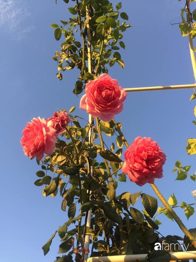 Khu vườn 30m² muôn hoa đua nở trên sân thượng của mẹ đảm thích mộng mơ ở TP. HCM - Ảnh 33.