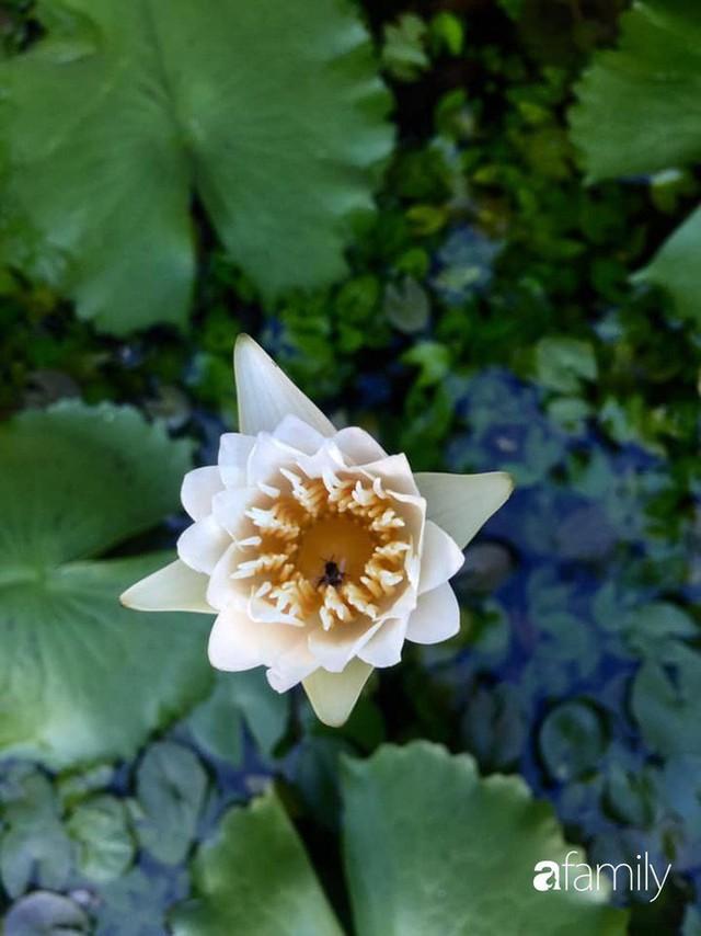 Khu vườn 30m² muôn hoa đua nở trên sân thượng của mẹ đảm thích mộng mơ ở TP. HCM - Ảnh 35.