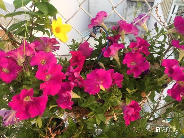 Khu vườn 30m² muôn hoa đua nở trên sân thượng của mẹ đảm thích mộng mơ ở TP. HCM - Ảnh 7.
