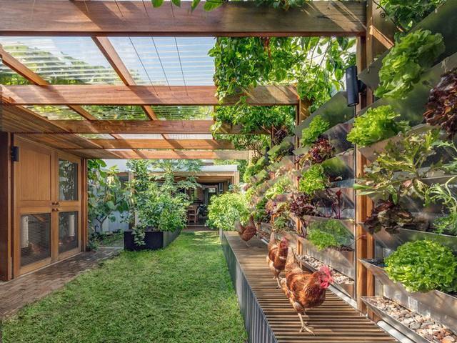 Ngôi nhà phố được thiết kế để giảm thiểu chi phí sinh hoạt, còn trồng rau nuôi gà ngay trong nhà nhưng vẫn sạch sẽ - Ảnh 14.