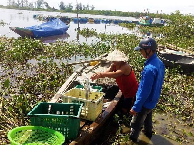 Gần 100 tấn cá nuôi lồng bè ở Hà Tĩnh chết bất thường sau một đêm - Ảnh 2.