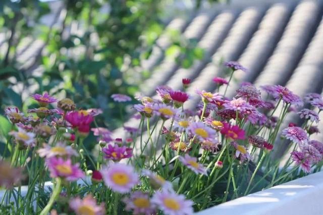 Cô gái trẻ bỏ ra 1,3 tỷ đồng cải tạo đất, mua giống hoa, biến sân nhà thành khu vườn đẹp lung linh  - Ảnh 30.