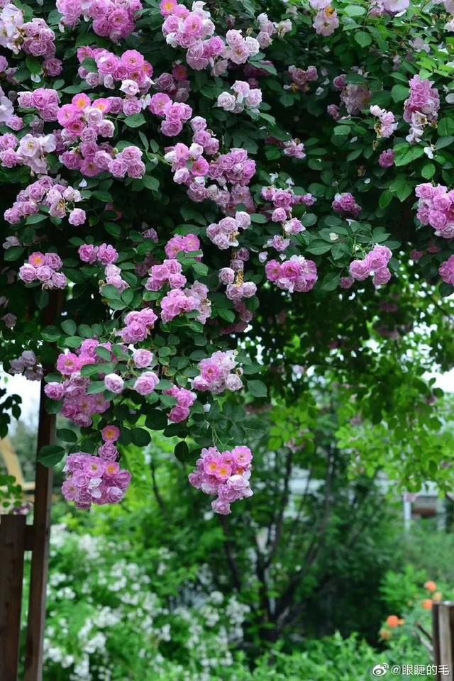 Cô gái trẻ bỏ ra 1,3 tỷ đồng cải tạo đất, mua giống hoa, biến sân nhà thành khu vườn đẹp lung linh  - Ảnh 7.