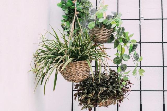 15 cách làm vườn treo trong nhà xinh yêu - Ảnh 1.