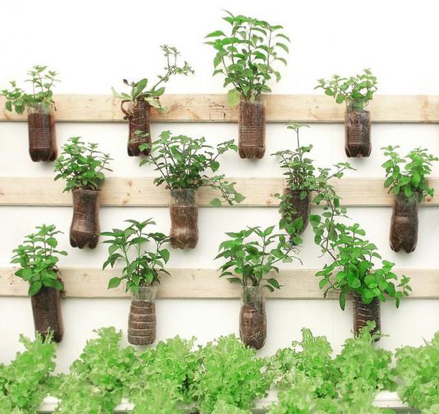 15 cách làm vườn treo trong nhà xinh yêu - Ảnh 11.