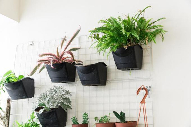 15 cách làm vườn treo trong nhà xinh yêu - Ảnh 5.