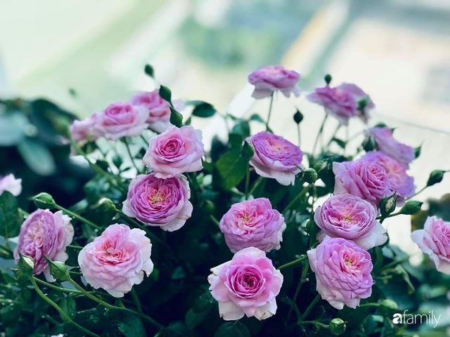 Ngày đầu năm ghé thăm những góc nhỏ dịu dàng sắc hoa trong căn nhà ấm cúng của bà mẹ trẻ Hà Nội - Ảnh 23.