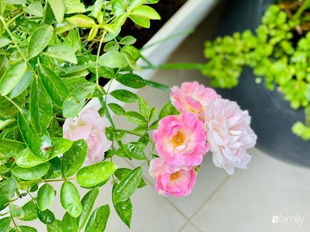 Ngày đầu năm ghé thăm những góc nhỏ dịu dàng sắc hoa trong căn nhà ấm cúng của bà mẹ trẻ Hà Nội - Ảnh 32.