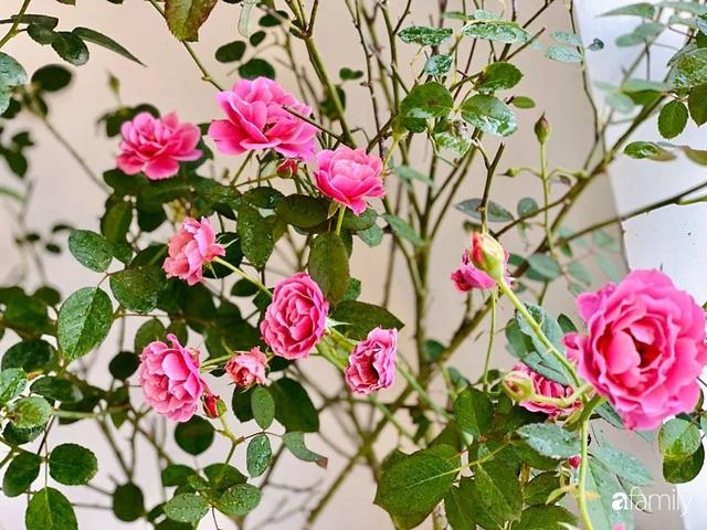 Ngày đầu năm ghé thăm những góc nhỏ dịu dàng sắc hoa trong căn nhà ấm cúng của bà mẹ trẻ Hà Nội - Ảnh 39.
