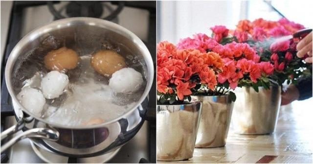 Chôn một quả trứng xuống vườn nhà, kết quả nhận được sẽ khiến nhiều người ngỡ ngàng - Ảnh 5.