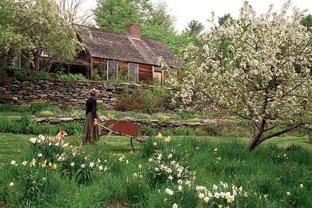 Cuộc sống an yên của cụ bà 92 tuổi bên khu vườn chính mình tự tay trồng hoa, rau quả ở vùng thôn quê - Ảnh 3.