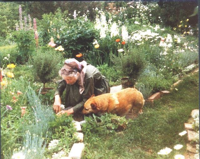 Cuộc sống an yên của cụ bà 92 tuổi bên khu vườn chính mình tự tay trồng hoa, rau quả ở vùng thôn quê - Ảnh 21.