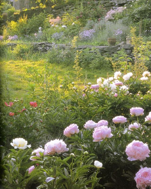 Cuộc sống an yên của cụ bà 92 tuổi bên khu vườn chính mình tự tay trồng hoa, rau quả ở vùng thôn quê - Ảnh 4.