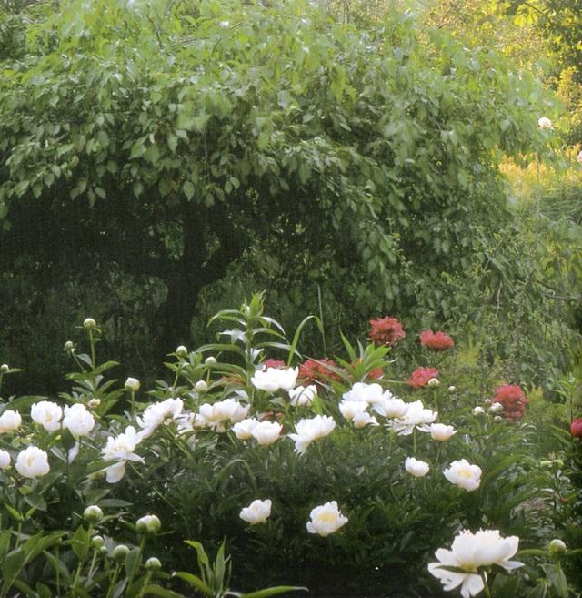 Cuộc sống an yên của cụ bà 92 tuổi bên khu vườn chính mình tự tay trồng hoa, rau quả ở vùng thôn quê - Ảnh 5.