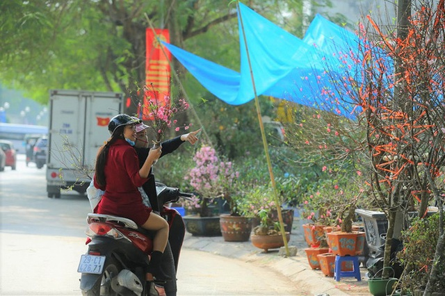 Vượt 300km về Hà Nội, đào rừng không lá không hoa hét giá khó tin gần 200 triệu đồng - Ảnh 8.