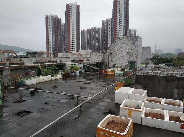 Bất ngờ với vẻ đẹp sang chảnh của sân thượng sau khi được cải tạo từ hiện trạng cũ kỹ, hoang vắng - Ảnh 2.