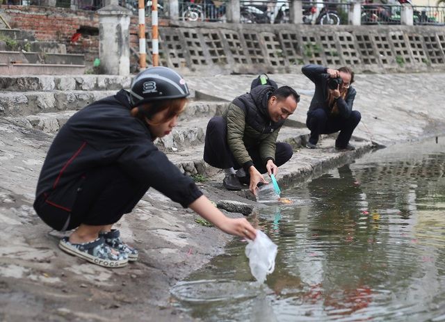 Hà Nội: Cá chép đỏ chết la liệt ở hồ sau khi người dân tiễn Táo quân về trời - Ảnh 7.